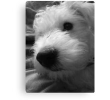 Adorable Nose Canvas Print