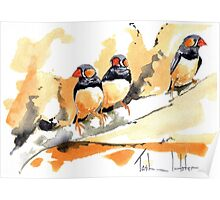 Zebra Finches on a branch Poster