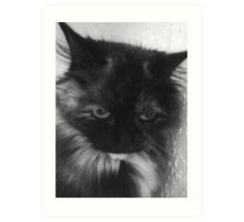 Charcoal Cat Art Print