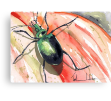 Green Carab Beetle Canvas Print
