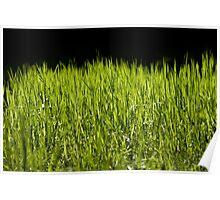 Green fresh bright grass leaves Poster