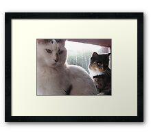 Mafioso kittens Framed Print