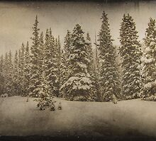 The Snow Forest by John Salisbury