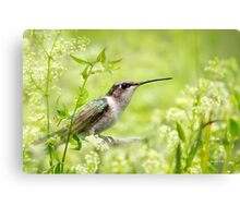 Hummingbird Hiding in Flowers Canvas Print
