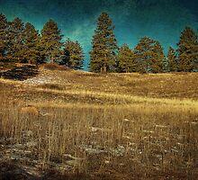 The Field by John Salisbury