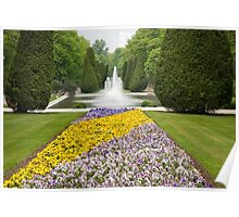 Purple and yellow pansies blooming Poster