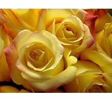 Blushing Yellow Roses Photographic Print