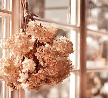hortensia old dried bouquet by Arletta Cwalina