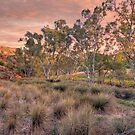 The Gum Tree Lined Bremer River, Kanmantoo, South Australia by Mark Richards