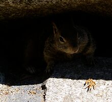Squirrel under a rock by photoclimber