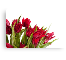 Red tulips bouquet sprinkled Canvas Print