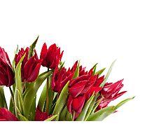 Red tulips bouquet sprinkled Photographic Print