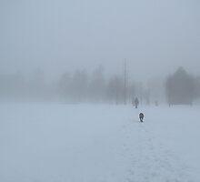 Dog in the Fog by Kerstin  Inga