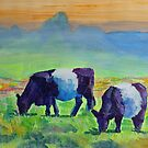 Belted Galloway Cows  by MikeJory