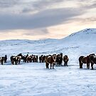 Horses at Reykjanes Peninsula Iceland by Pixie Copley LRPS