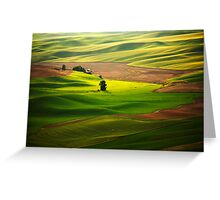Silky Green Greeting Card