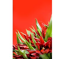 Bunch of red tulips bouquet  Photographic Print