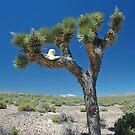 Joshua Tree Hatstand by ten2eight