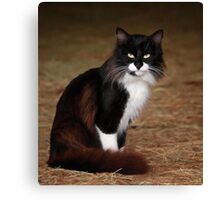 Billy Katt Canvas Print