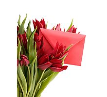 Bouquet of cut red tulips  Photographic Print
