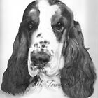 Cocker Spaniel by Karen Townsend