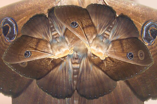 moth by Christopher Birtwistle-Smith