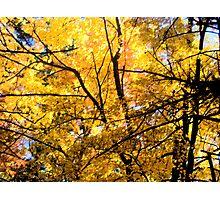 Autumn Majesty Photographic Print