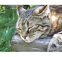 Razzle lazing in the sun Photographic Print