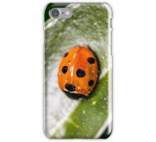 Ladybird in the garden iPhone Case/Skin