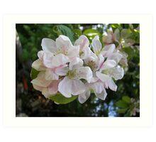 Summer Apple Blossoms Art Print