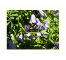 Bumblebee buzzing Art Print