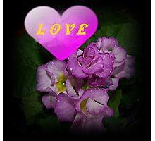 Love Primroses Photographic Print