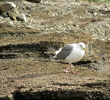 The 'Don' Seagull by TheKoopaBros