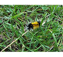 Fuzzy Caterpillar Photographic Print