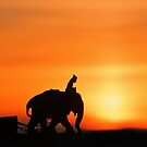 Mahout on an Elephant at Sunset. by David Alexander Elder
