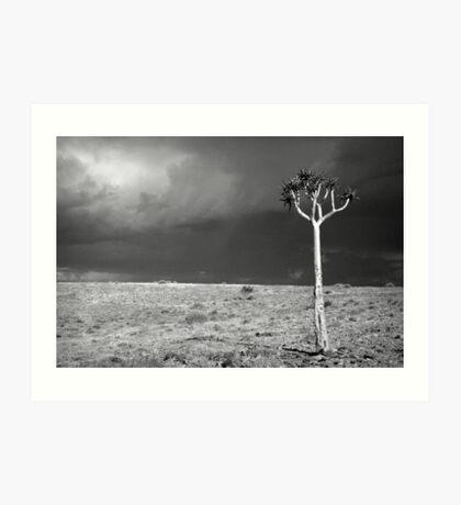 Kokerboom Tree in Storm Art Print