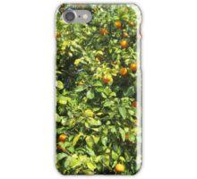 Citrus tree 1 iPhone Case/Skin