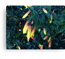 Vibrant Native Fuchsia Flower Canvas Print