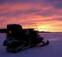 Lynx at the sunset by Katariina Lonnakko