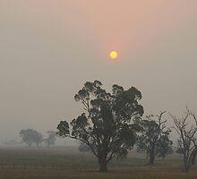 Victorian Bushfires by GailD