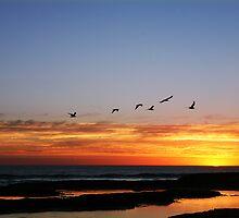 Portsea,Australia by Rosina  Lamberti