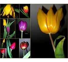 Tulip Time - Collage Photographic Print