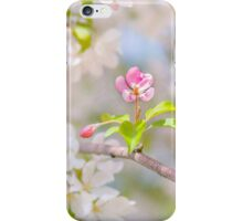 Apple blossom - Beauty iPhone Case/Skin