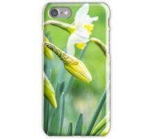 Daffodils in a Kent garden iPhone Case/Skin