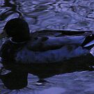Twilight Duck by Andrew  Wakelin