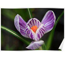 Spring Sparkle Poster