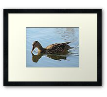 Hello down there Framed Print