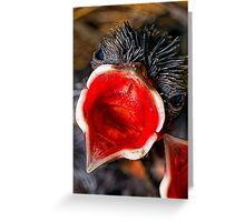 Just hatched Greeting Card