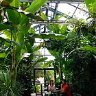 Jungle View    ^ by ctheworld