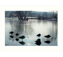 Sleeping Geese Art Print